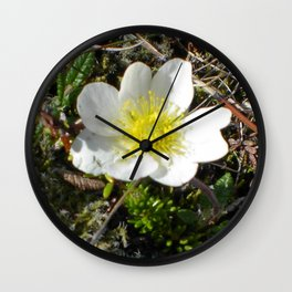 Holtasóley / Mountain Avens Wall Clock