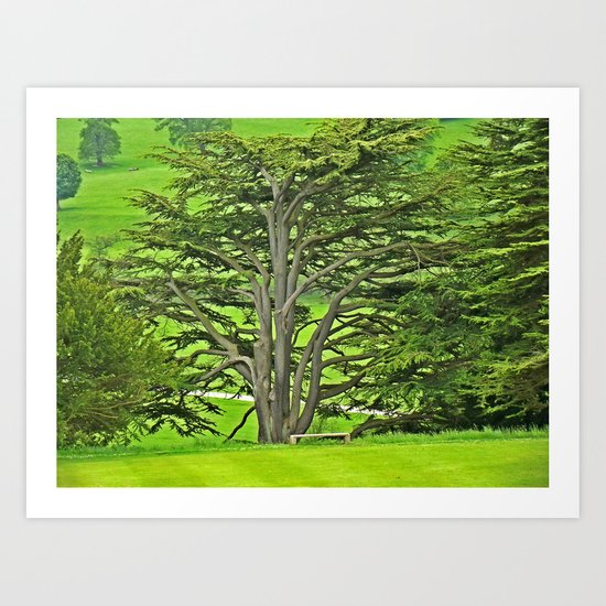 Old English Tree 1 Art Print