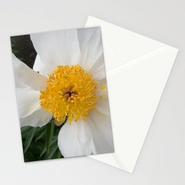 White Beauty by Teresa Thompson Stationery Cards
