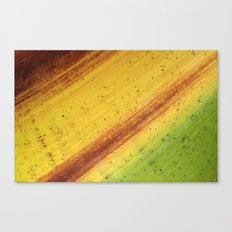 Tropical Textures #3 Canvas Print