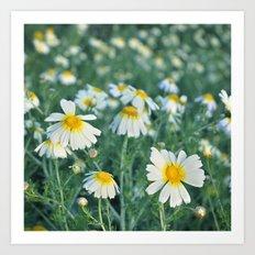 Spring daisies Art Print