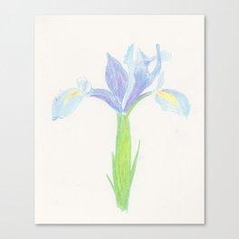 Wedgewood Iris Canvas Print