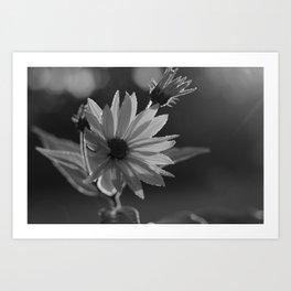 Black and White Sunshine Art Print