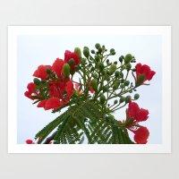 A Blossom from Haiti Art Print