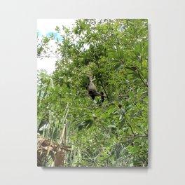 Monkey in the Jungle Metal Print
