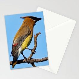 Cedar Waxwing on a Limb Stationery Cards