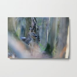 ROE DEER IN WOODLAND Metal Print
