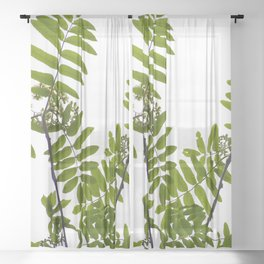 Green Rowan Leaves White Background #decor #society6 #buyart Sheer Curtain