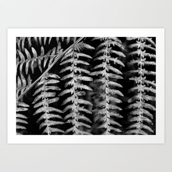 Black and White Fern Pattern Art Print