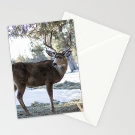 A Stoic Buck Stationery Cards