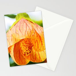 Red Vein Indian Mallow In Bloom | Watercolor Painting Stationery Cards