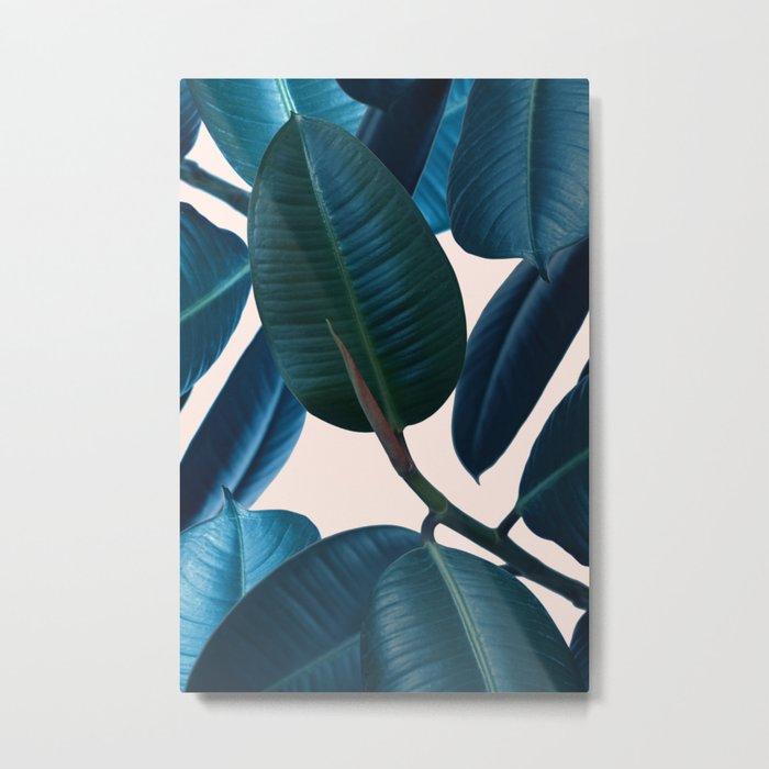 Ficus elastica 2 Metal Print