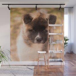 Cute American Akita Puppy #decor #society6 #buyart Wall Mural