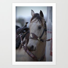 Horse in bridle Art Print