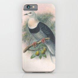 Vintage Print - The Birds of Australia (1910) - Black-Banded Fruit Pigeon iPhone Case