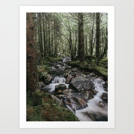 The Fairytale Forest - Landscape and Nature Photography Art Print