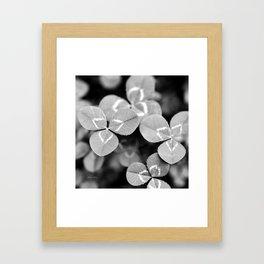 Clover Leaves Framed Art Print