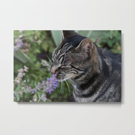 Purrfect Scent Metal Print