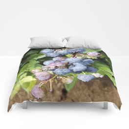 Ready to pick blueberries? Comforters