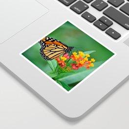 Monarch's Busy Day Sticker