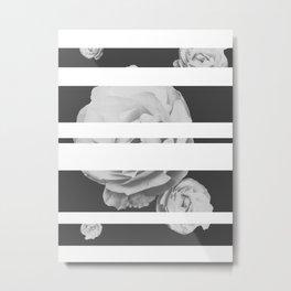 White Stipe Roses Metal Print