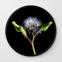Dandelion flower 5 Wall Clock