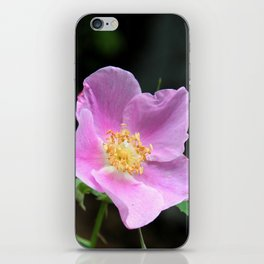 Pale Pink Wild Rose iPhone Skin