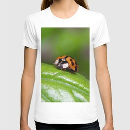 Small red ladybird resting on a green basil leaf T-shirt