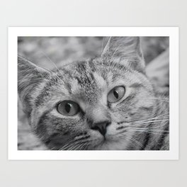 Black and White Cat Face Art Print