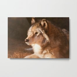 Wolf Beauty Metal Print