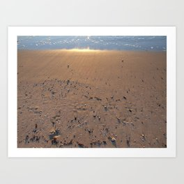 NJ Shore shells and more Art Print