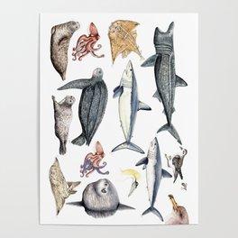 Marine wildlife Poster