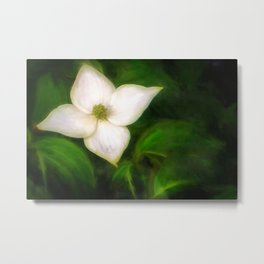 Single Dogwood Flower Natural Metal Print