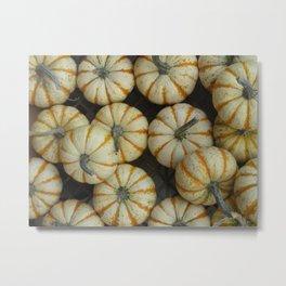 White pumpkins Metal Print