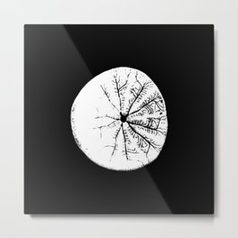 Sand dollar from below with black background, enhanced contrast. Metal Print
