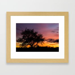 Sundown Tree Framed Art Print