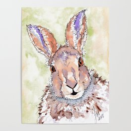 Peek-a-boo Hare Poster