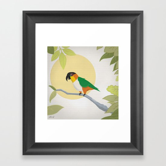 Black-Headed Caique Parrot Framed Art Print