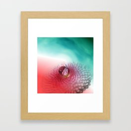 Bellis on red and turquoise Framed Art Print