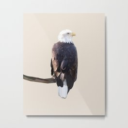 Poly Bald Eagle Metal Print