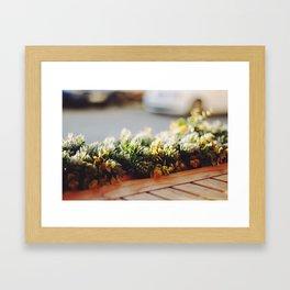 Ambers. Framed Art Print