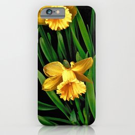 Bouquet Of Golden Spring Daffodils iPhone Case