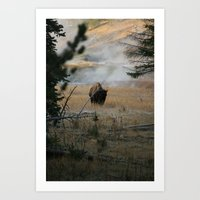 Yellowstone Bison on a steamy November morning Art Print