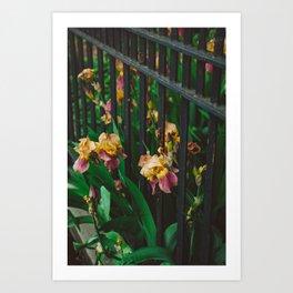 Brooklyn Blooms Art Print