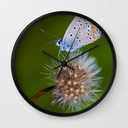The butterfly and the delicate plant Wall Clock