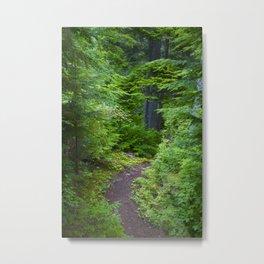 Walk through the Forest Metal Print