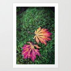 Maple Leaves. Art Print