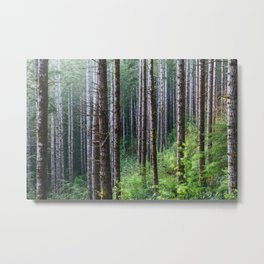 Trees: II // Oregon Metal Print