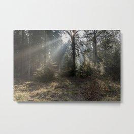 Morning Sunbeams Metal Print