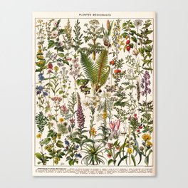 Adolphe Millot - Plantes Medicinales B - French vintage poster Canvas Print
